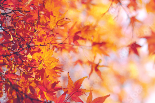 Fotobehang Natuur Fall Background