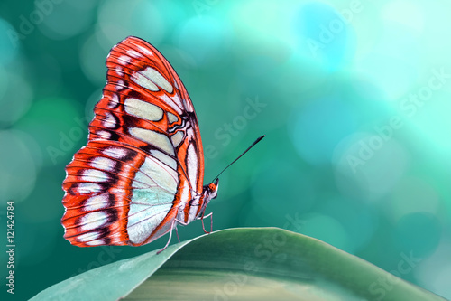 Fotobehang Vlinder Butterfly