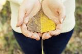 girl holding yellow poplar leaf