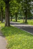 花と緑の道ばた