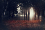 Abstract and mysterious background of blurred forest