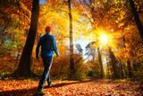 Fototapety Walking im Wald bei herrlichem Sonnenschein