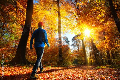 Walking im Wald bei...