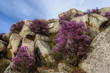 mountains rhododendron boulders sky clouds
