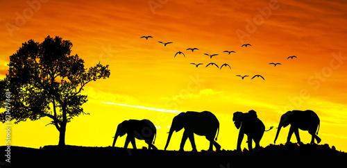 Keuken foto achterwand Geel animales en el paisaje