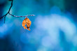 lone dry yellow leaf on a branch on a beautiful art background. Autumn photo on a warm day.