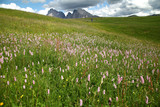 Malga in fiore sulle Dolomiti