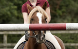 Young rider showing a pony a high pole on a jump - September 2016 - Girl riding a Chestnut pony showing the animal the height of the top pole on a fence