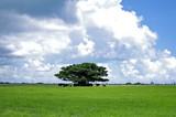 沖縄県 黒島 牧場