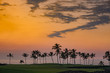 Hawaii Palm Tree Sunset 1