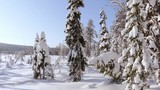 Sunny windless winter day. Trees covered with a thick layer of snow. Frozen lake in the background. Panorama