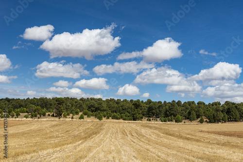tarlalar ve ormanlar üzerindeki bulutlar Poster