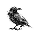 raven on white background picture