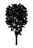 silhouette a tree silhouette Isolated on white background