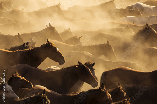 Silhouette of wild horses in sunset