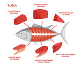 infographic of the tuna cuts on white background , 6 part of tuna . vector