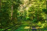 magic autumn forest tram path