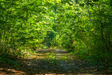 magic autumn forest path
