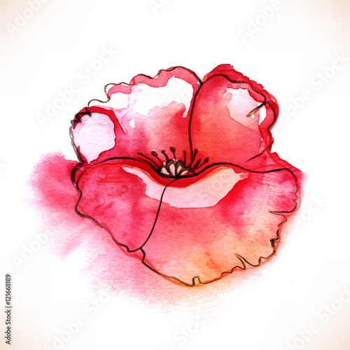 Foto op Canvas Bloemen vrouw Red Watercolor Poppy flower over white backgound.