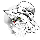 Portret kota w kapeluszu