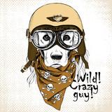 Portret psa - retro kask motocyklisty i chusta z obrazami czaszki.