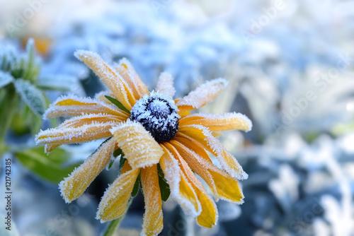 Blumen 741