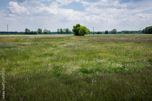 Poster Green meadow on Mazowsze region in Poland