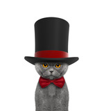 Cute cat in a high hat cylinder and necktie