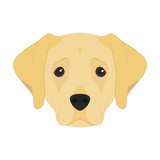 Labrador Retriever dog isolated on white background vector illustration