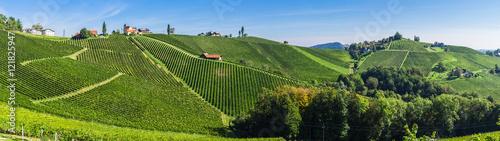 Poster Panoramafoto s Weinberge in der Steiermark unter blauem Himmel