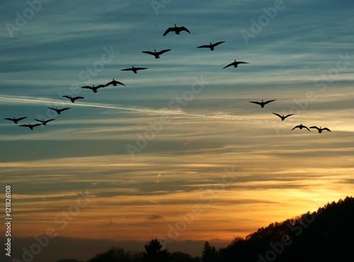 Bird Migration at Sunset Poster