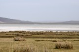 surface of the salt lake, salt marsh. north of Mongolia.