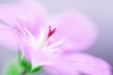 Macro fotografia di un fiore selvatico rosa in piena fioritura