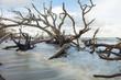 Fallen trees in flood tide