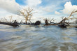 fallen trees and fast water