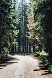 leśna droga w górach
