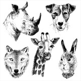 hand drawn animals set
