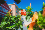 Blooming flowers with colorful houses in background, Monterosso al Mare, Italian Riviera