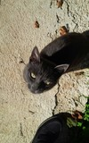 sguardo di gatto nero
