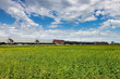Train Rolling Past Canola Field Under Blue Sky