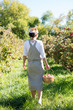 Rear view of young female harvesting apples at local apple orchard in Ontario, Canada. Wearing hair scarf, in front of apple trees, in bright sunlight. Gala apples in basket and on trees.