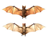 Vampire bats isolated on white background, 3D rendring