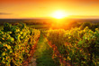 Leinwandbild Motiv Weinberg im goldenen Licht bei Sonnenuntergang