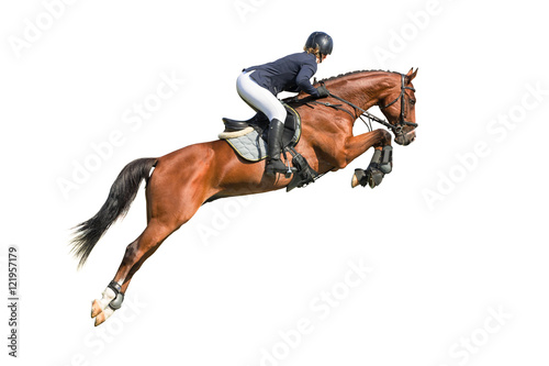 Rider jumping on a horse isolated on white Poster