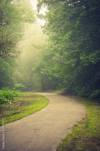 Asphalt footpath in foggy park, Krakow, Poland