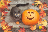 Halloween pumpkin with a cute little cat and autumn leafs
