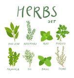Set of 8 vector herbs - 122014555