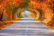Autumn Fall Road landscape - Real trees tunne