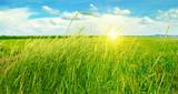 summer field, green grass, blue cloudy sky and sunrise