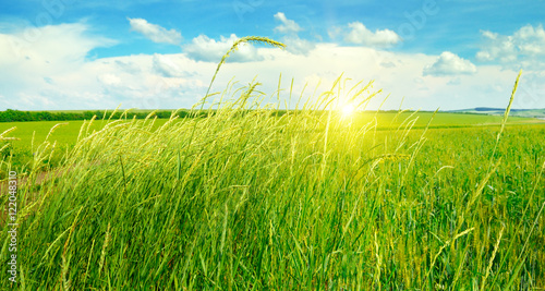 summer field, green grass, blue cloudy sky and sunrise